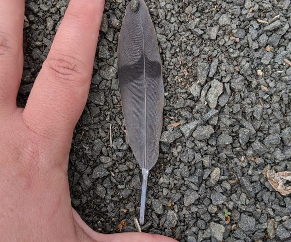 Who does this feather belong to?