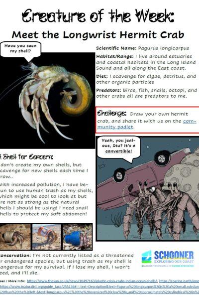 hermit crab creature